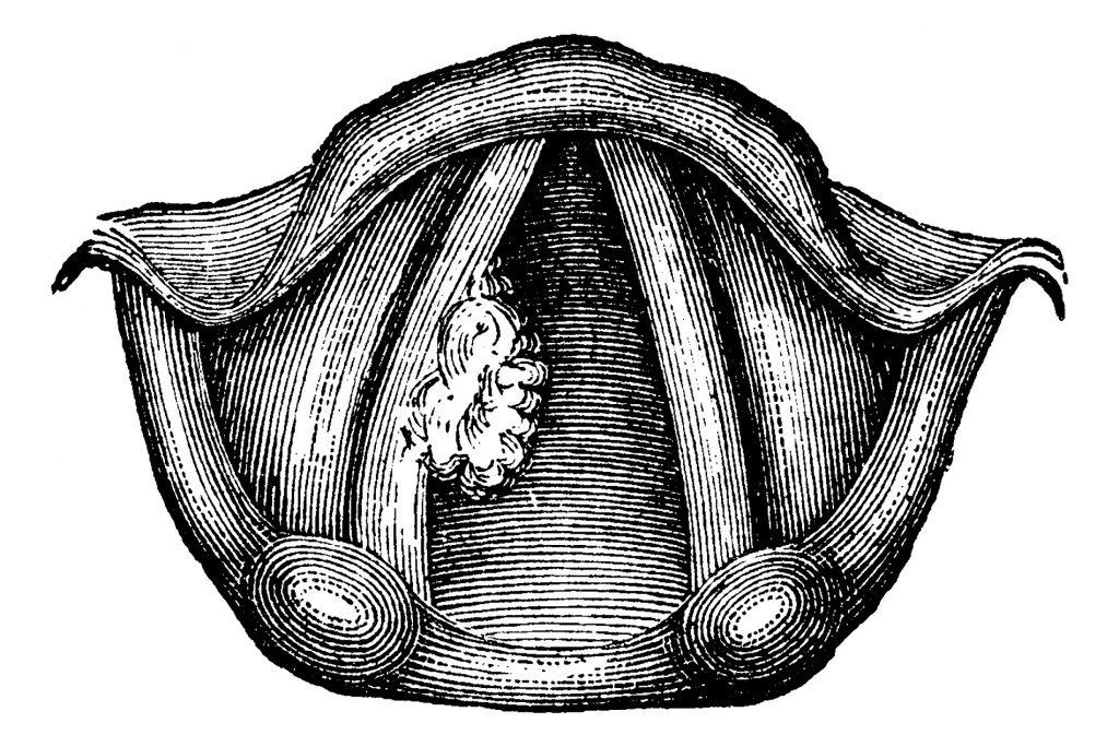 лечение паразитов желудке