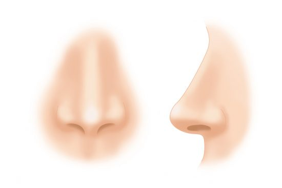 Строение и функции носа человека